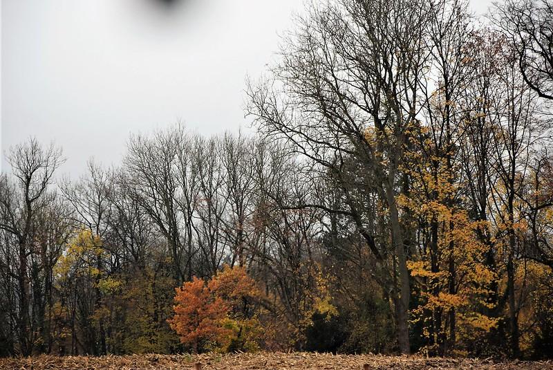Autumn 08.11 (2)