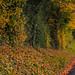 Hampshire Drive