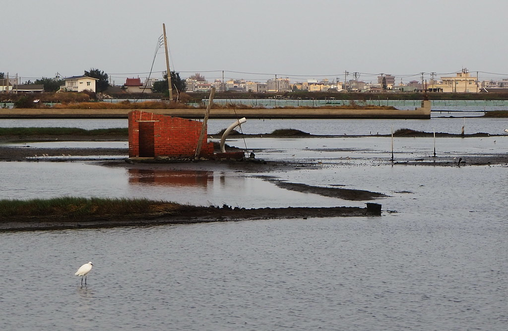 口湖成龍濕地 (8)