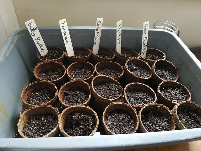 Seedingls