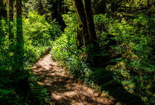 boulderriverwilderness arlington washington unitedstates us wildernesstrail hiking northwest trinterphotos richtrinter landscape oldgrowth spring