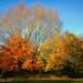 Autumn in Royal Park