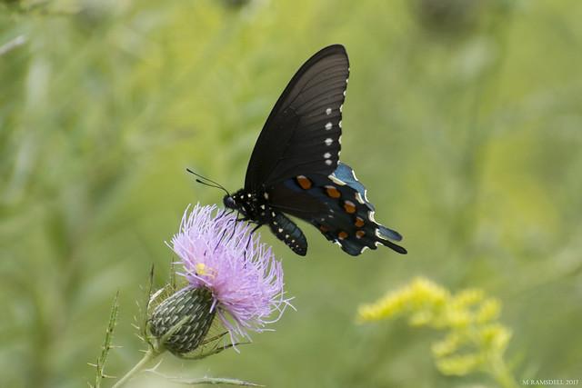 Butterfly 2017-169
