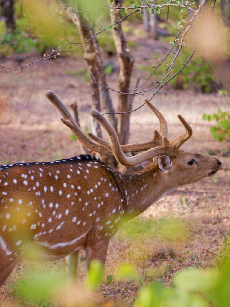 085-India-Ranthambore