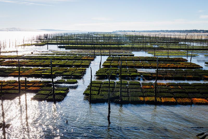 Bassin ostréicole - Plage du Cap Ferret - Bassin d'Arcachon - Hiver 2016