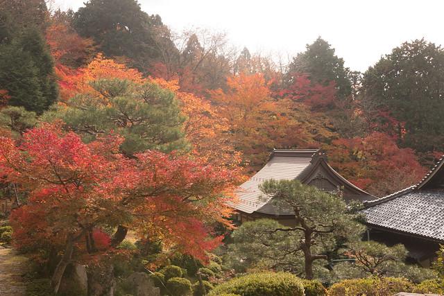 百済寺(湖東三山)紅葉