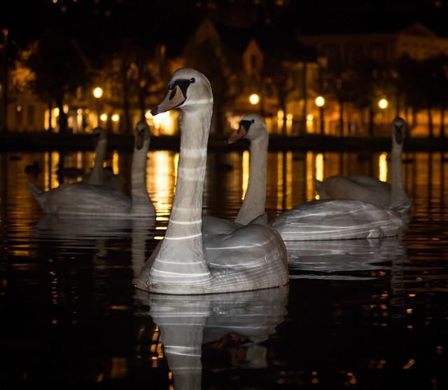 Mr Swan II