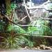 Tropical house; Reptiles