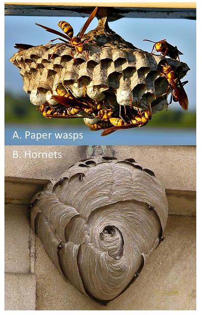 2017-11-26-Wasps-BROADLEY-Figure2