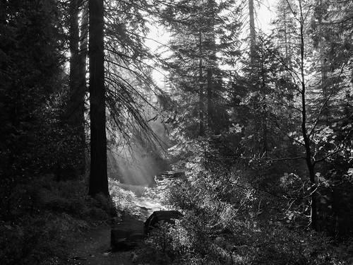 trees sunrise forest trail bigstump morning sequoia landscape kingcanyon