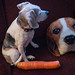 Beagle & the carrot