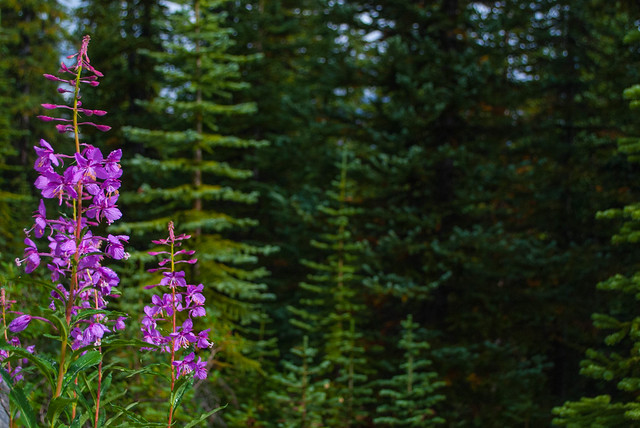 2017 08 - Canada - Banff and Jasper-62.jpg