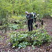 Protecting the coppiced stumps in Coldfall Wood