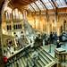 london nature museum