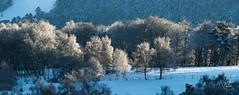 Foret d'hiver. - Photo of Jeansagnière