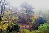 Wilhelmsteich Park bei Nebel