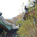 Shaolin_roof