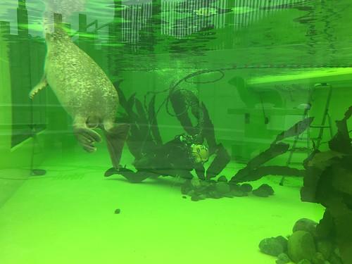 Werkzaamheden in zeehonden bassin
