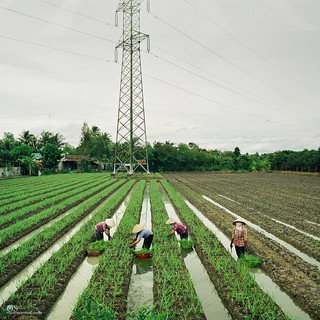 Tien Giang Farmers