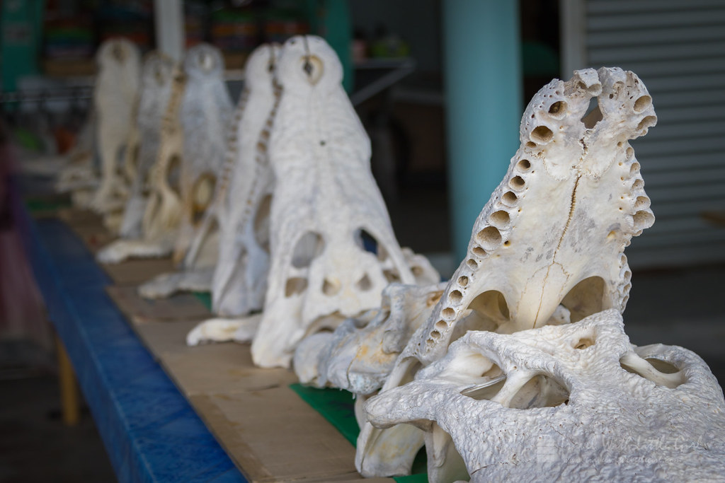 Crocodile Bones at the entrance, Teluk Sengat Crocodile Farm