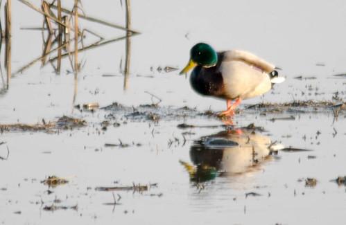 Skagit Wildlife Area-017