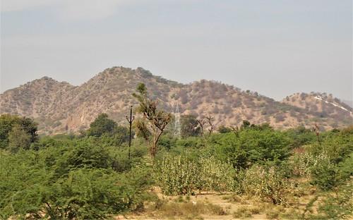 i-jodhpur-mount abu-route  (17)