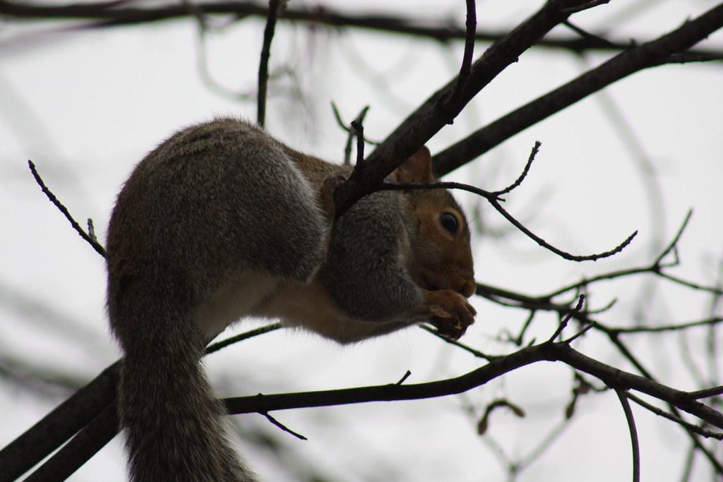 Squirrel Invasion 18