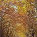<p><a href=&quot;http://www.flickr.com/people/infinity99/&quot;>Hadi Al-Sinan Photography</a> posted a photo:</p>&#xA;&#xA;<p><a href=&quot;http://www.flickr.com/photos/infinity99/27228592549/&quot; title=&quot;Lebanon (3)&quot;><img src=&quot;http://farm5.staticflickr.com/4546/27228592549_fd715f8591_m.jpg&quot; width=&quot;160&quot; height=&quot;240&quot; alt=&quot;Lebanon (3)&quot; /></a></p>&#xA;&#xA;<p>On the hills near Beirut, Nov 2017</p>