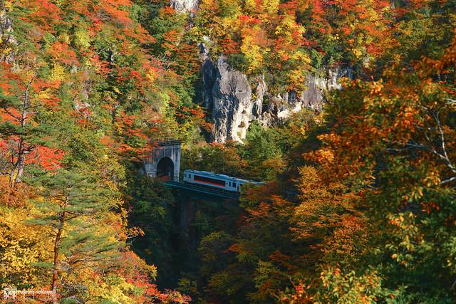 秋色是山巒中的一抹紅 | 29