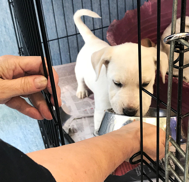 A day in the life of a SPCA voluneer