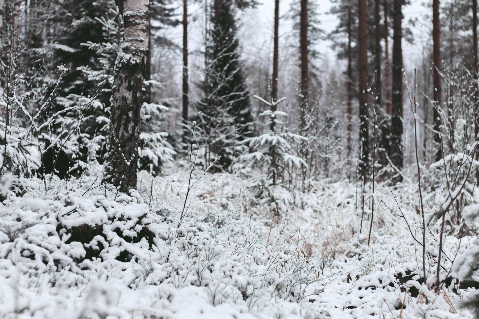 talvi4
