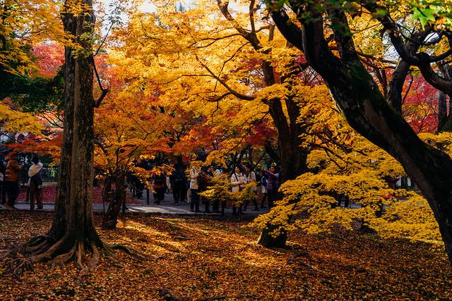 Kyoto_Tofuji_01