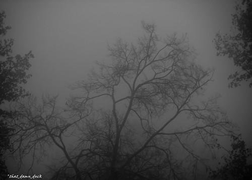 blackwhite monochrome foggy fog nature bw blackandwhite
