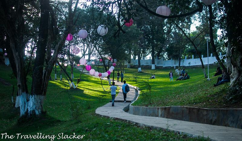 Shillong Cherry (3)