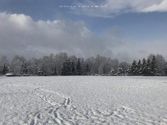 今朝の雪景色
