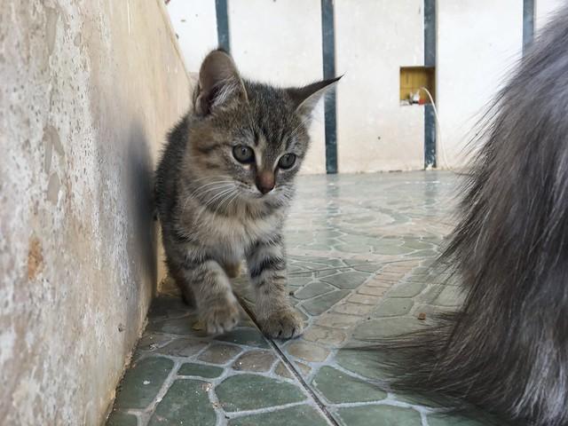 エジプトには猫が多いですよ!