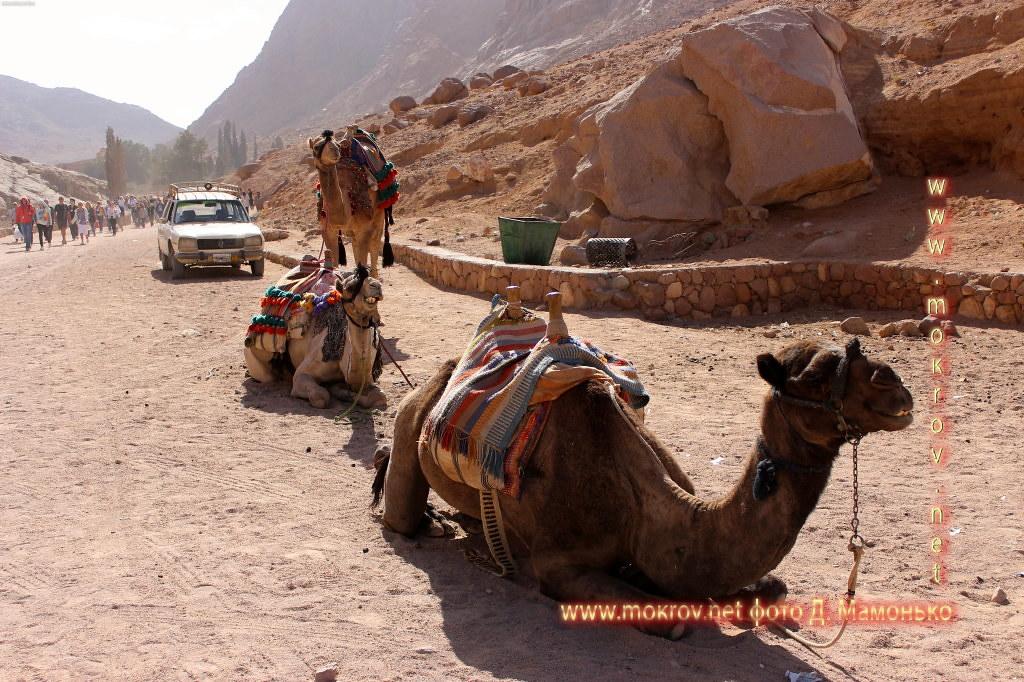 Синайские горы живописные и необычные фотографии