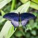 Butterfly #55.