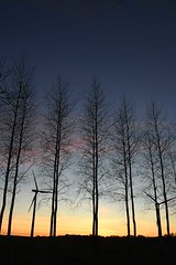 Sunset through the poplars, with wind turbines - Photo of Neulette