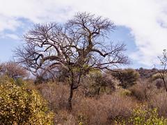 2017 Lake Manyara ,nature and some animals