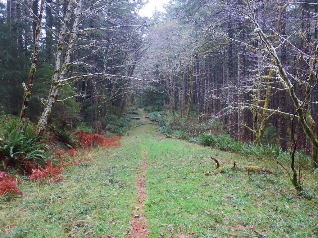 Cummins Ridge Trail