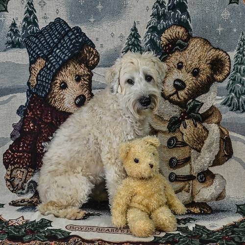 Teddybear Christmas