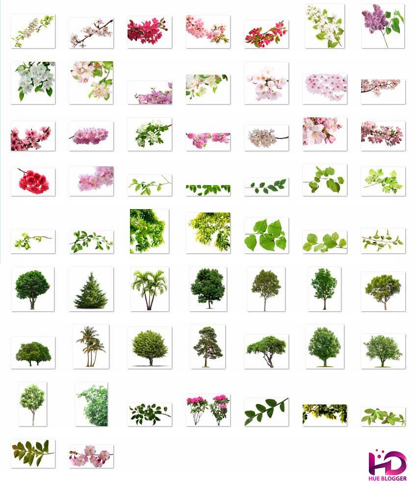 50+ Overlay cành hoa lá tuyệt đẹp
