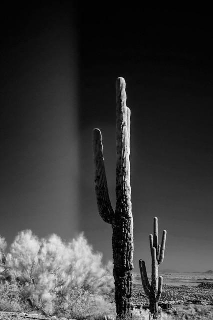 Cactus portrait, Nikon D3300, AF-S DX VR Nikkor 18-55mm f/3.5-5.6G II