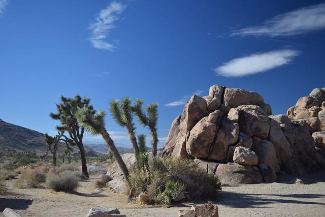 Joshua Tree & Anza-Borrego Desert