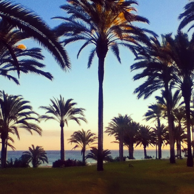 #canarie #palme #tropical #spagna #summer #love #beach