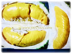 Golden yellow flesh of Durio zibethinus(Durian, Common Durian, Civet Fruit, Durian Kampong in Malay), 9 Nov 2017