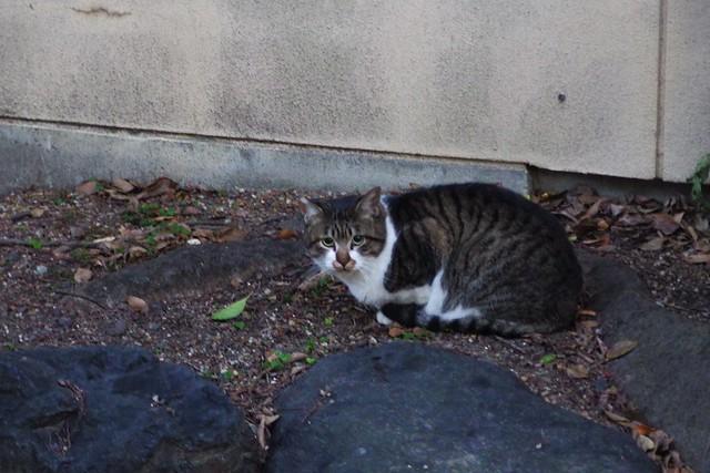 Today's Cat@2017-12-15