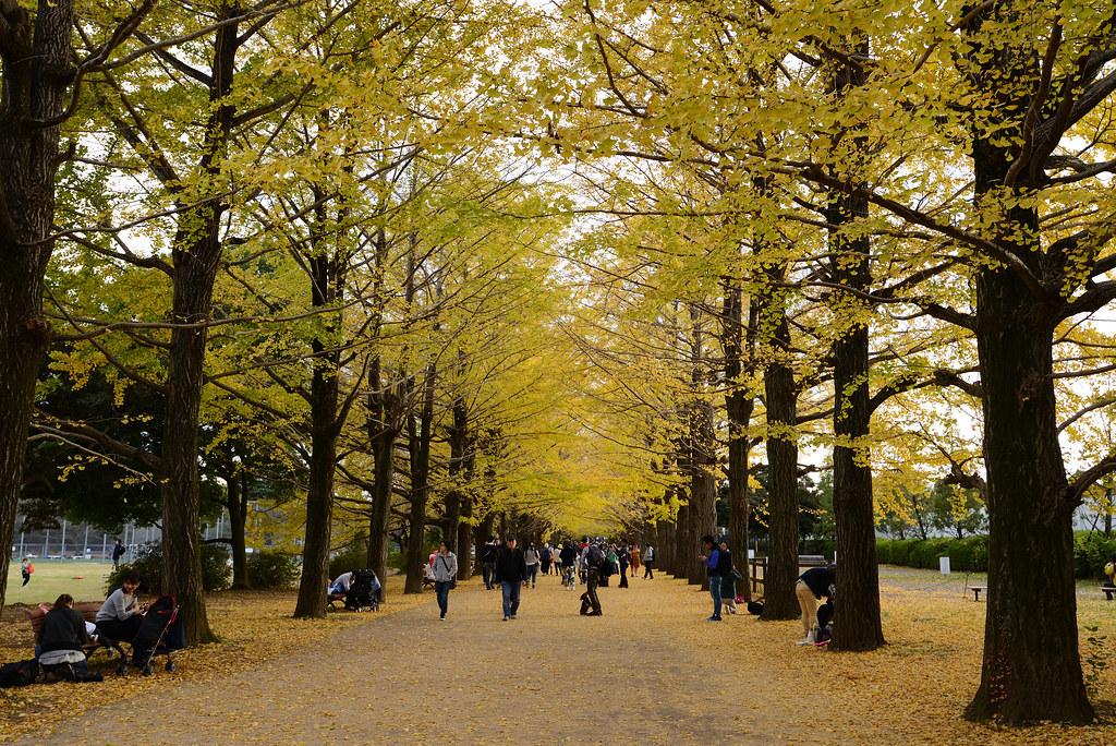 Showa Kinen Park 昭和記念公園