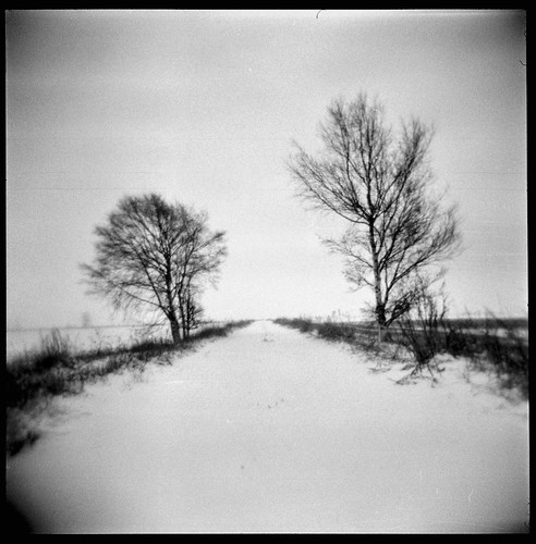 holga countryroad snow trees winter bw